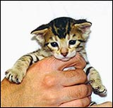 Name ideas for felines that are humorous, religious, fun, cute, beautiful, famous and more, from HDW Enterprises!