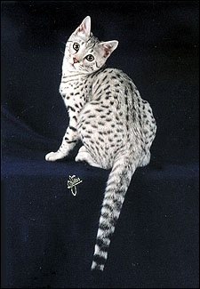 Savannah Cats from Foo...