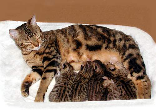 Cat Litter And Pregnancy