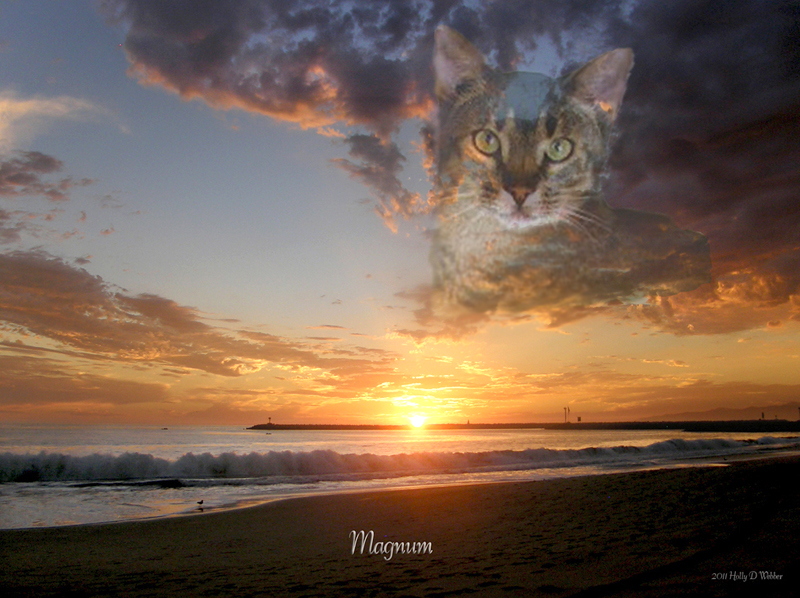 Foothill Felines Magnum, my photographic memorial to the cat who changed my life 
