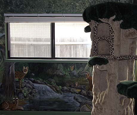 Foothill Felines cattery - one of our indoor rooms